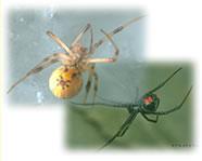 クモの生態